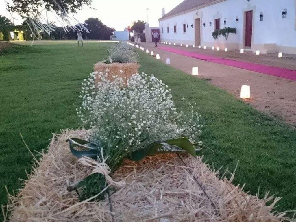 Camino de alpacas con paniculata, velas y alfombra en Dehesa Bolaños