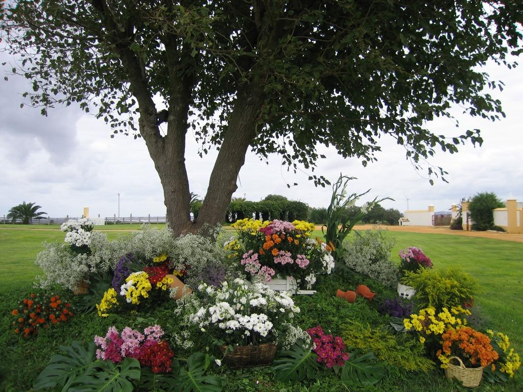 Árbol con flores en jardín Dehesa Bolaños