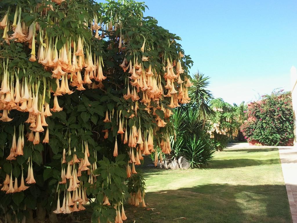 Jardín lateral salones Dehesa Bolaños