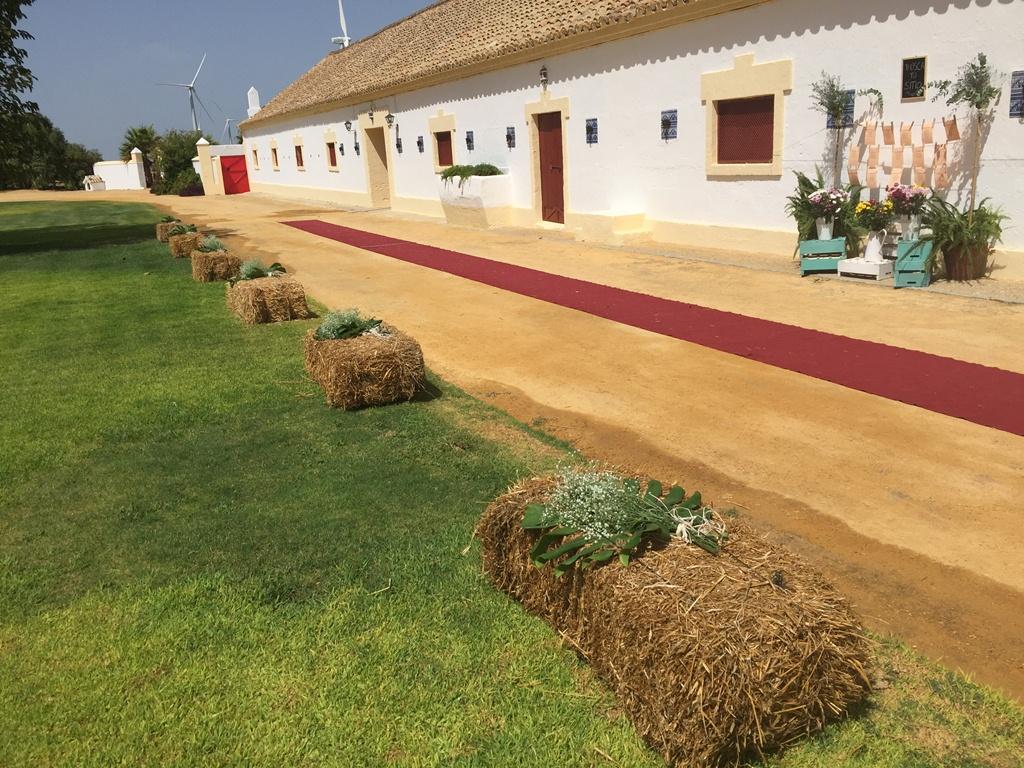 Camino de alpacas - Boda Lorena & Jesús en Dehesa Bolaños