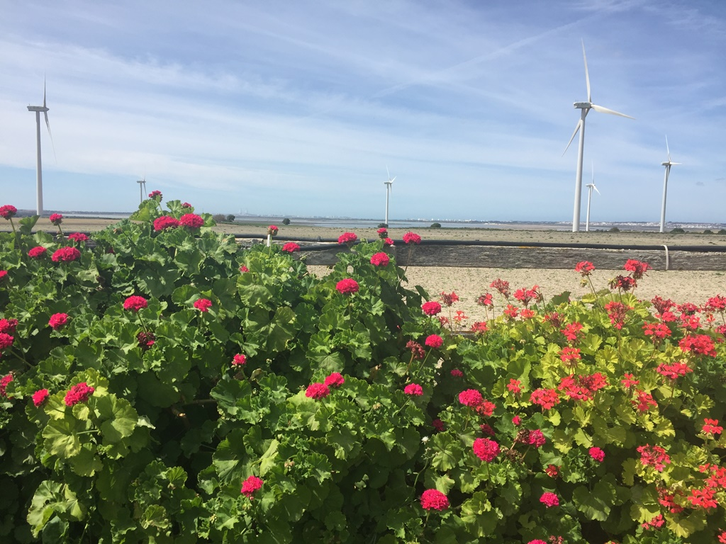 Vistas bahía de Cádiz - Boda Azahara & J. Enrique en Dehesa Bolaños